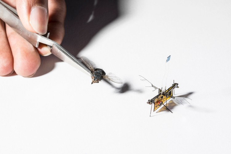 The first wireless flying robotic insect takes off | Tech News 2