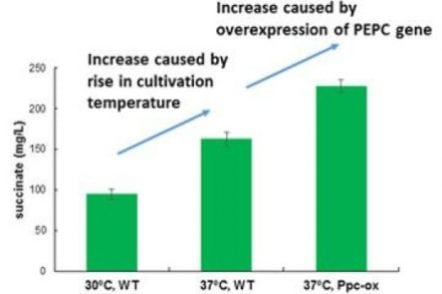 World's most efficient production of succinate from carbon dioxide | Tech News