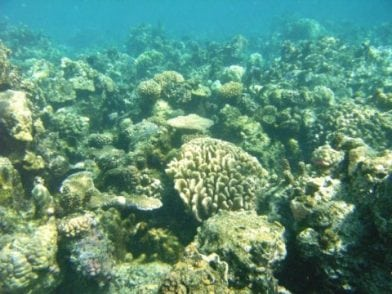Algal partner responds to climate-change stresses more strongly than coral host   Tech News
