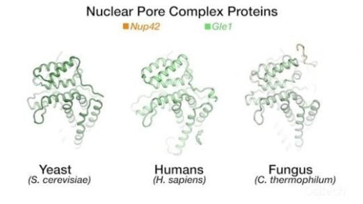 How 'gatekeepers' to a cell's nucleus let genetic instructions pass through | Tech News