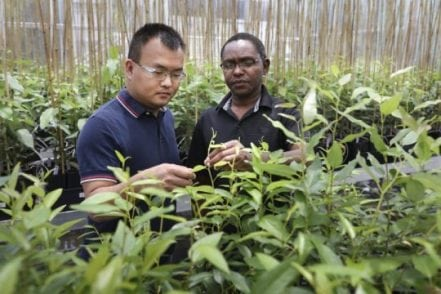 Critical plant gene takes unexpected detour that could boost biofuel yields | Tech News