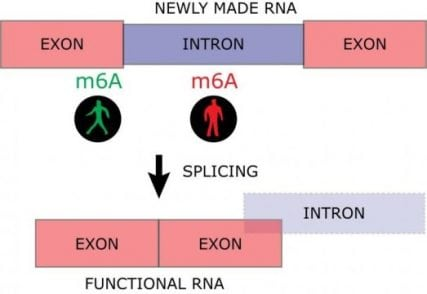Encrypted messages in biological processes | Tech News