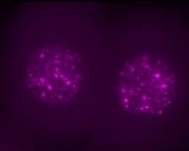 Not junk: 'Jumping gene' is critical for early embryo | Tech News