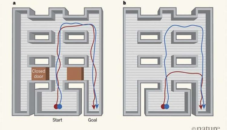 Scientists make a maze-running artificial intelligence program that learns to take shortcuts | Tech News