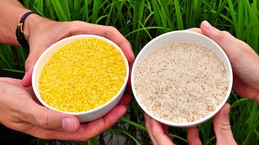 GMOs Help Us Combat Global Food Security and Sustainability Challenges | Tech News