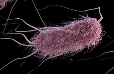 Machine-Learning Software Predicts Behavior of Bacteria   Tech News