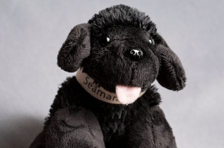 NASA Sending Lewis and Clark Dog Doll to Space for Park Service | Tech News