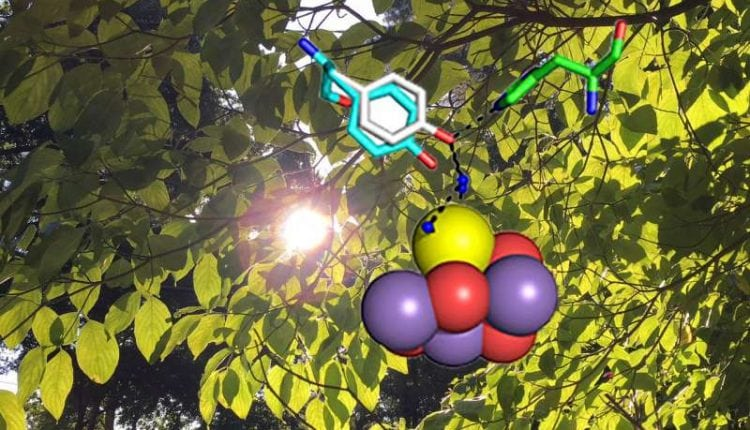Making the oxygen we breathe, a photosynthesis mechanism exposed | Tech News