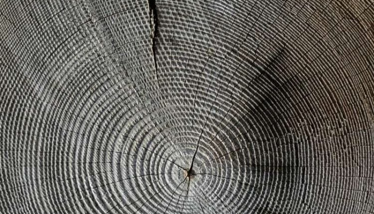 Scientists study how wood is formed and how that process can help develop materials for the future | Tech News