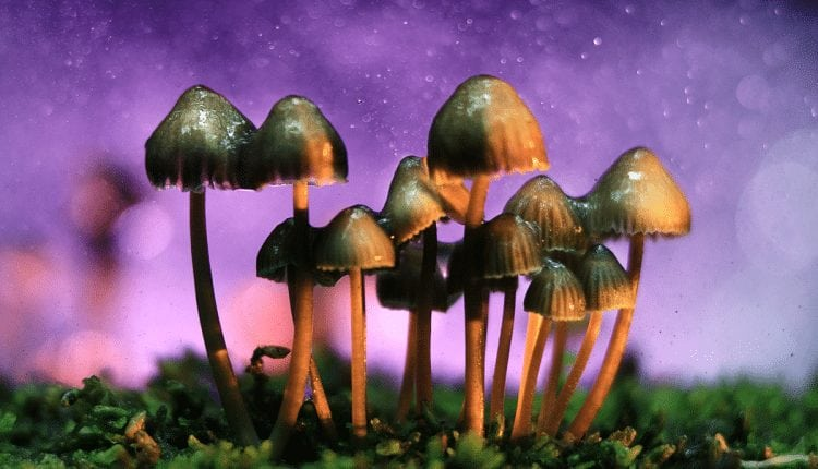 A startup backed by Peter Thiel has churned out 20,000 doses of magic mushrooms, and is making more | Digital Asia