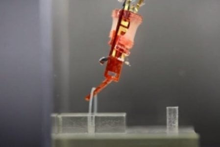 Cometh the cyborg: Improved integration of living muscles into robots | Robotics