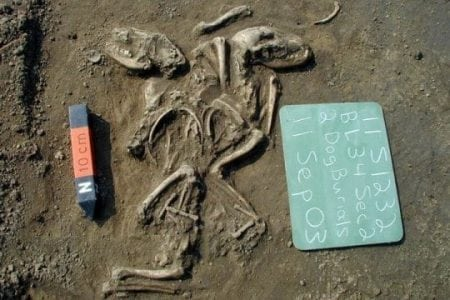 First dogs in the Americas arrived from Siberia, disappeared after European contact | Bio Tech