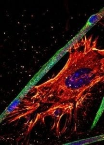 Essential mechanism to generate healthy muscle | Bio Tech