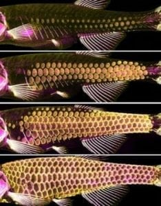 The ancient armor of fish | Tech Blog
