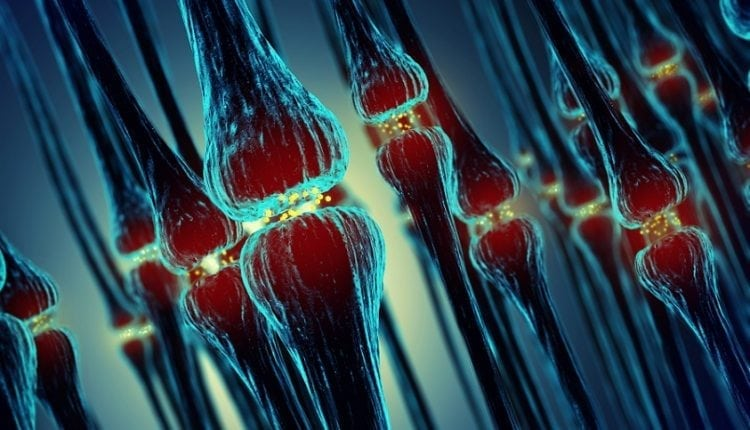 Artificial Nerves Move Biological Muscle | Digital Asia