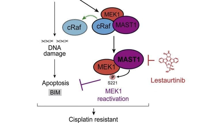 Enzyme Identified that Helps Make Cancer Resistant to Cisplatin | Bio Tech