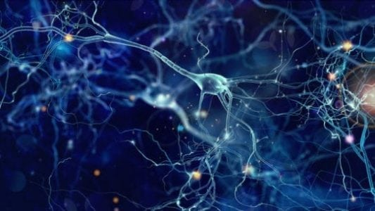 Neurons can carry more than one signal at a time | Bio Tech