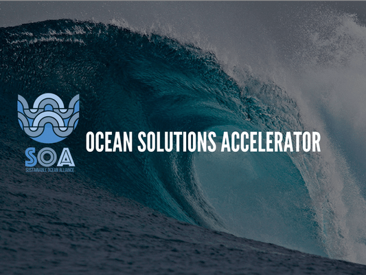 Ocean Solutions Accelerator names its first wave of conservation startups | Startup