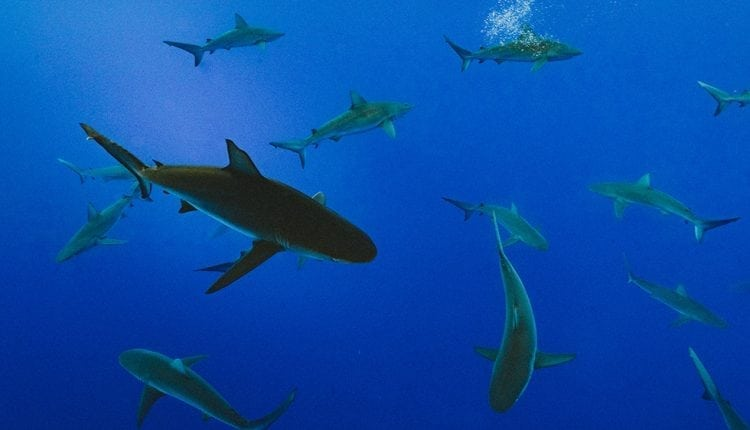How sharks and camels could be the keys to curing brain diseases | Innovation Tech