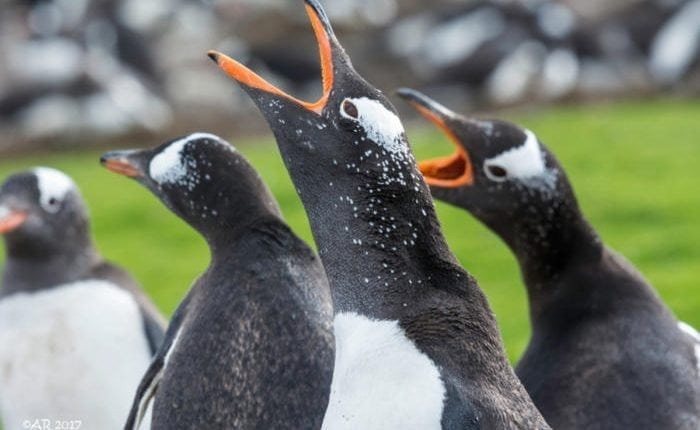 The aftermath of the Gentoo GitHub hack | Virtual Tech