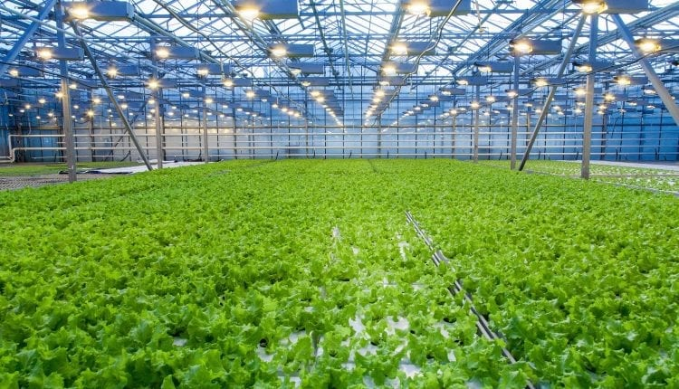 Crypto Startups Don't Need Sandboxes, They Need Greenhouses | Crypto News
