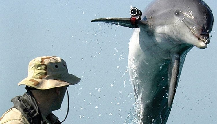 Move over Navy SEALs, dolphins are the US's secret weapon | Innovation Tech