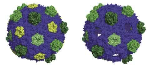 Scientists find new methods to control bacterial factories for biotech aims