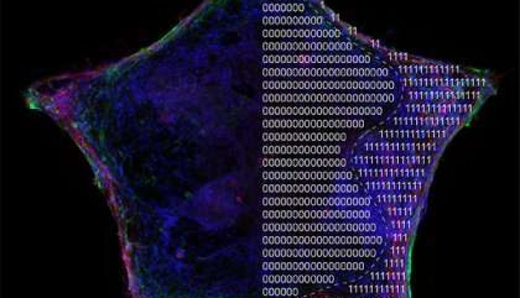 Bioengineers borrow from electronics industry to get stem cells to shape up   Digital Science