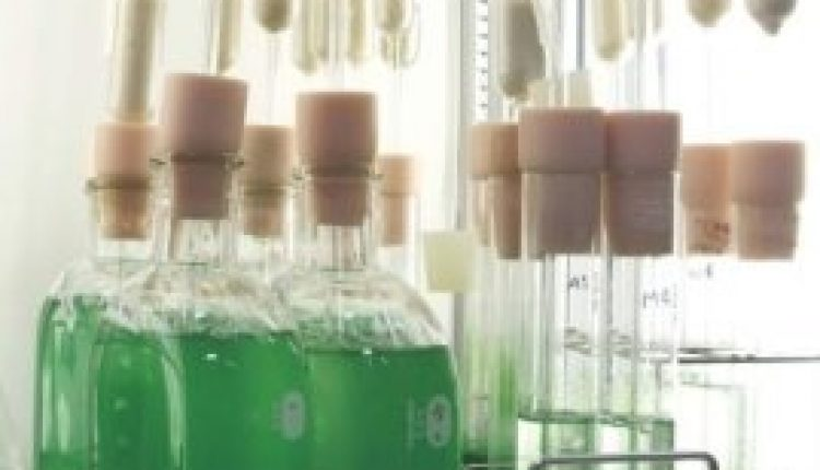 Harnessing energy from algae: Enzyme could help accelerate biofuel production   Digital Science