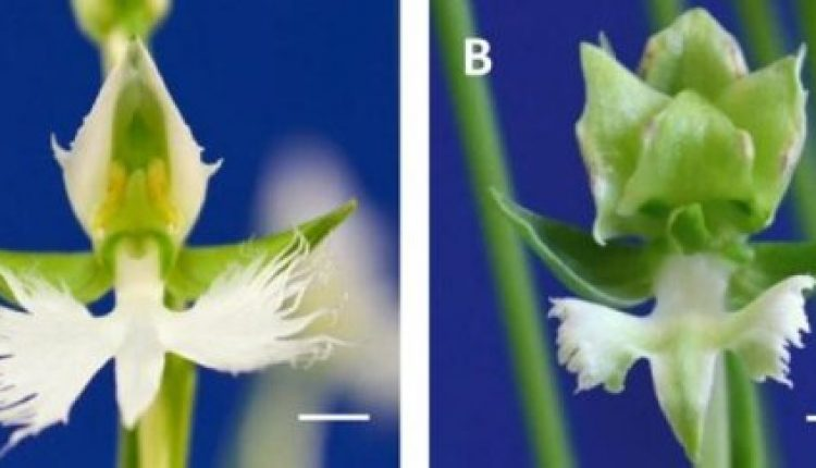 Mechanism behind orchid beauty revealed | Digital Science