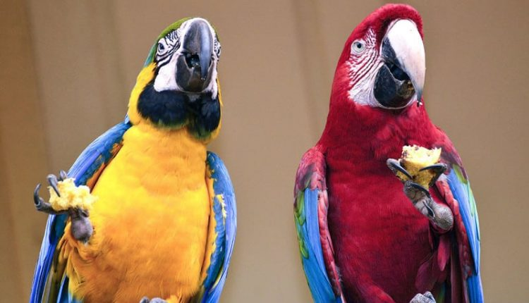 Parrots make wise investment decisions to get what they want: walnuts | Artificial intelligence