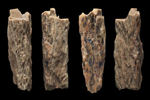 A sliver of bone from a girl who was half-Neanderthal, half-Denisovan