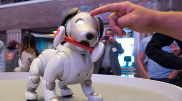 aibo with chew toy