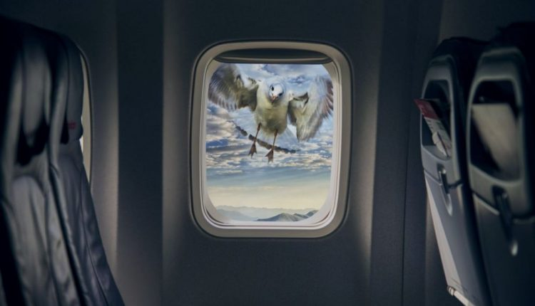 Planes Kill Huge Numbers of Birds. LEDs Could Save Their Lives. | Virtual Reality