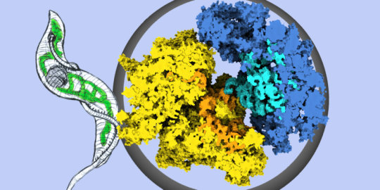 A very special protein synthesis machinery   Digital Science