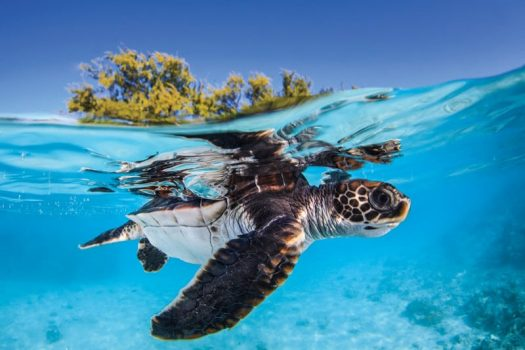 Just one tiny piece of plastic may be enough to kill a baby turtle | Artificial intelligence
