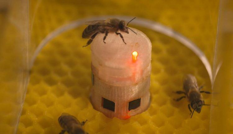 Robots ensure bees get the buzz | Innovation