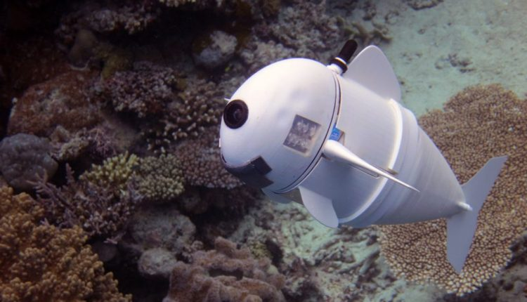 Soft robotic fish swims alongside real ones in coral reefs | Artificial intelligence