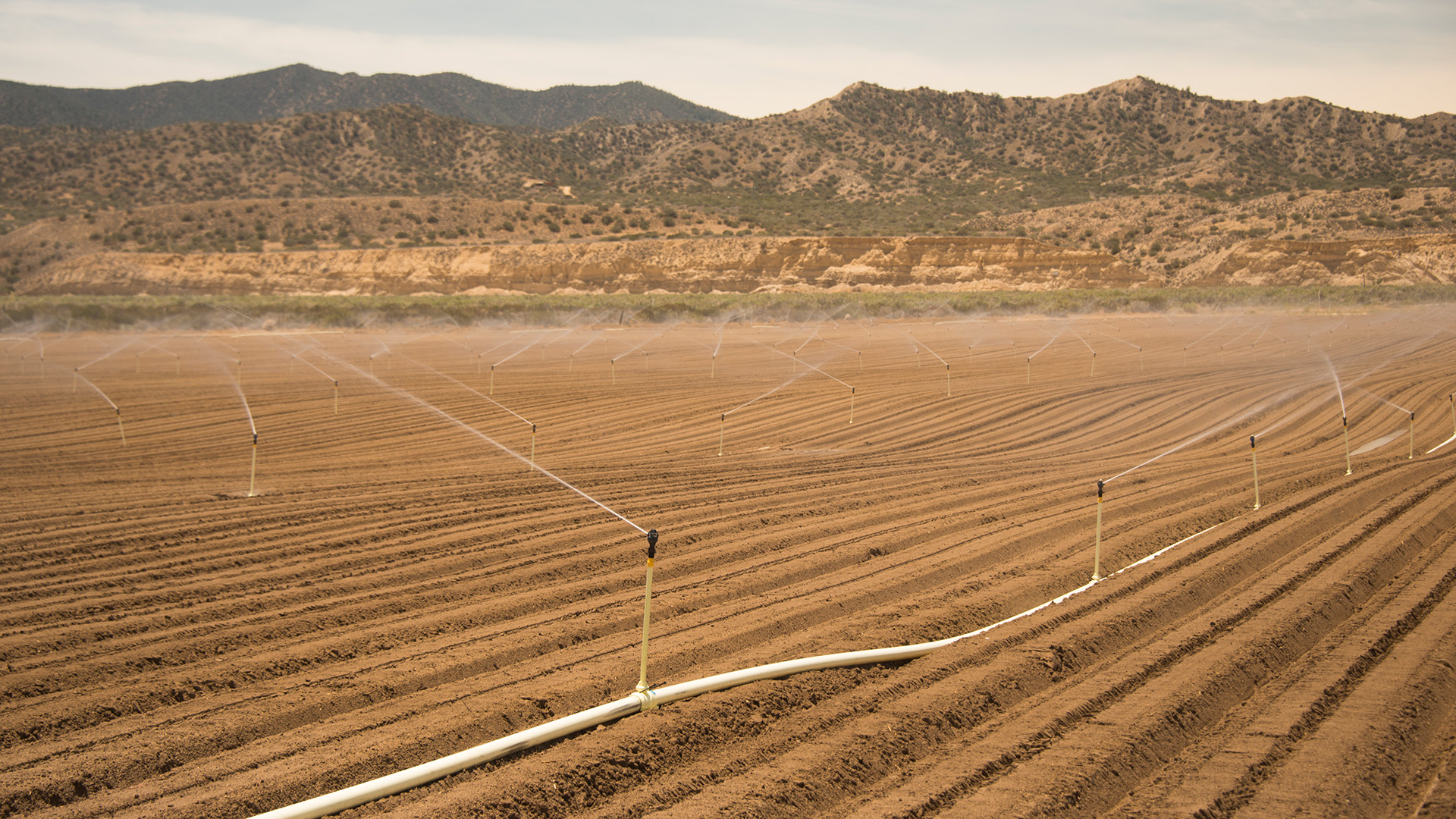 Fields being irrigated on the edge of the desert in the Cuyama Valley