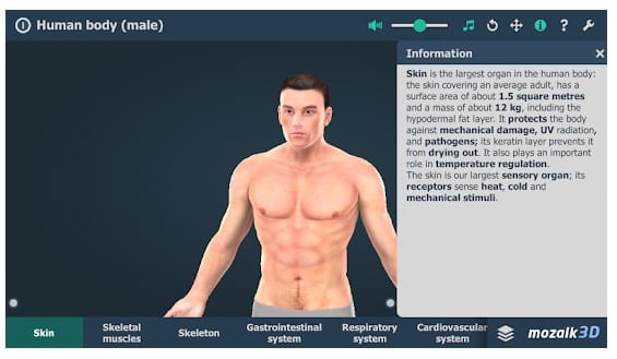 Human Body (Male) Educational VR 3D 1