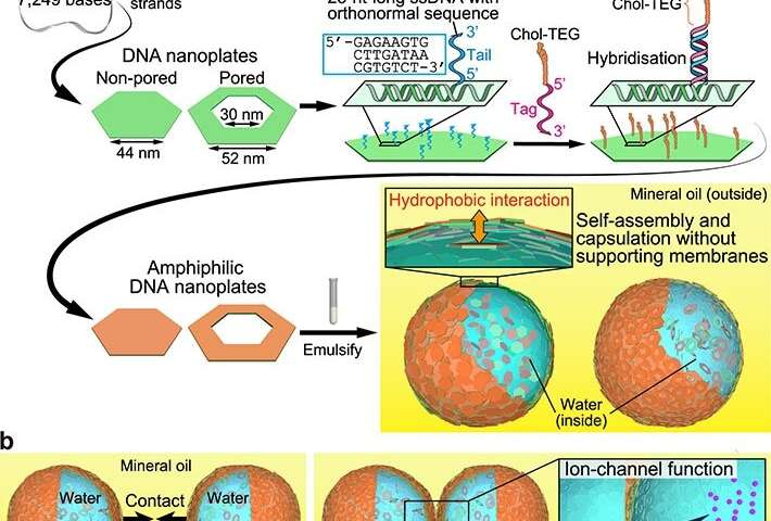 Scientists develop DNA microcapsules with built-in ion channels