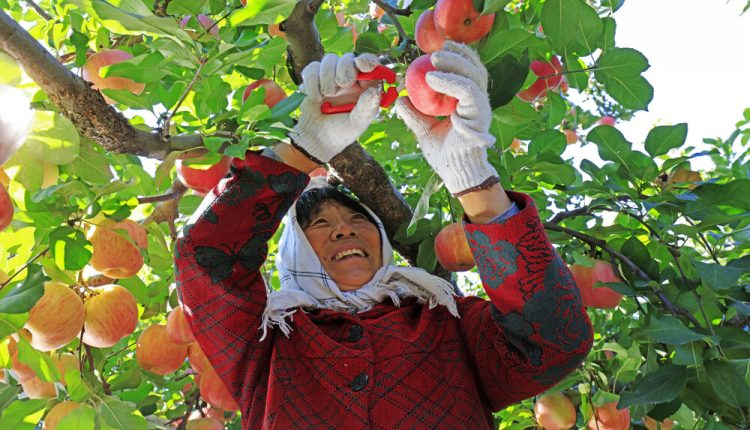 How e-commerce is helping farmers in rural China sell apples and peppers