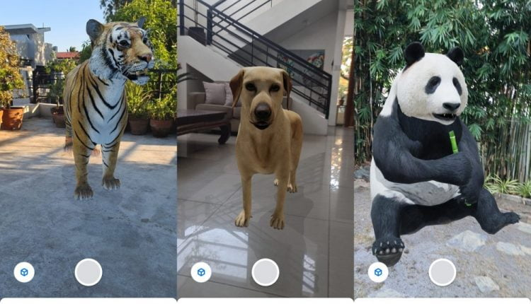 How To View Google 3D AR Animals on Your Smartphone