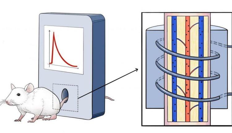 Researchers describe nanoparticles behavior in vivo
